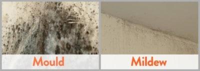 Identify Mold-vs-Mildew